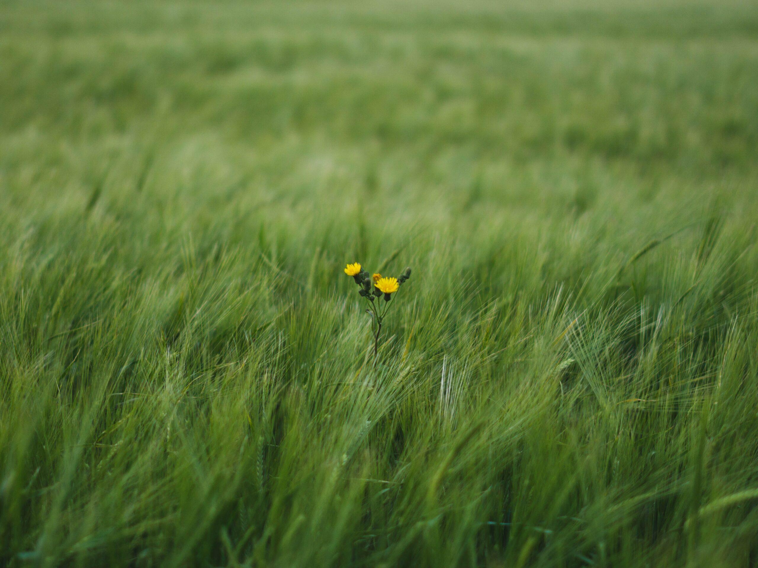 Une fleur dans un champ